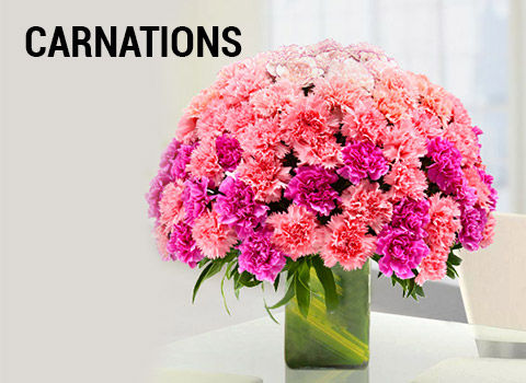 carnations-mob-17-feb-2019.jpg
