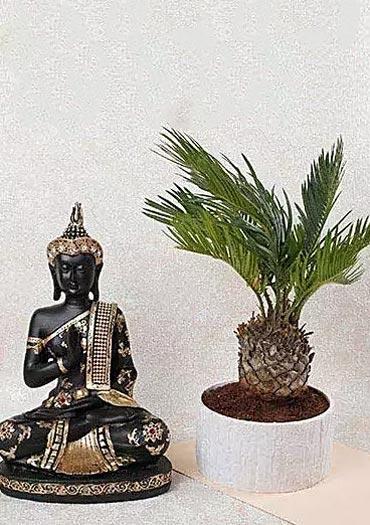Plants with Buddha