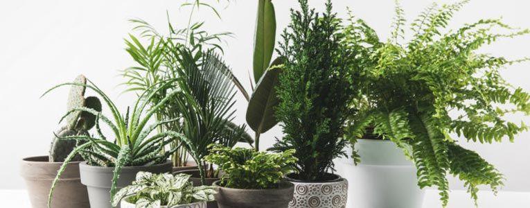Plants for Terrace Balcony