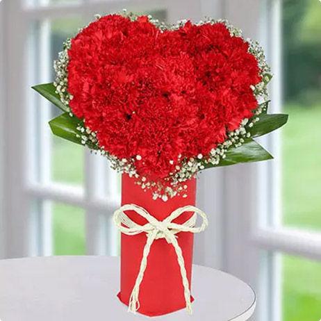 Gift Carnations UAE