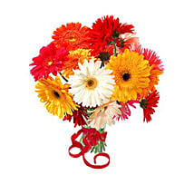 12 Multi Color Gerberas Bouquet: Flower Bouquets to Canada
