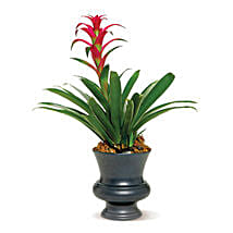 Blooming Bromeliad: Thank You Flowers Canada
