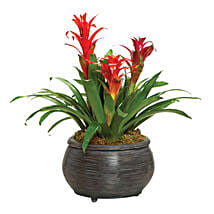 Bromeliad Beauty: Send Gifts to Toronto