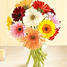 Multi Color Gerberas in Vase: I am Sorry Flowers to Canada