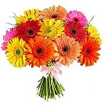 Crazy Daisy ITL: Gifts to Italy