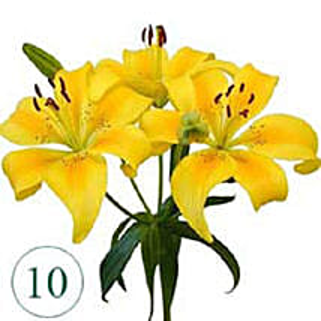 10 Blooms of Yellow Lilies KU: Send Lilies to Kuwait
