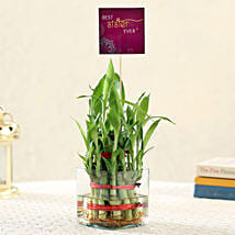 2 Layer Bamboo For Best Sister: Bamboo Plants