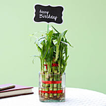 2 Layer Bamboo Plant For Happy Birthday: Good Luck Plants for Him