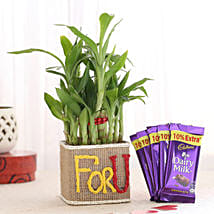 2 Layer Lucky Bamboo In For U Vase With Dairy Milk Chocolates: Send Plants n Chocolates