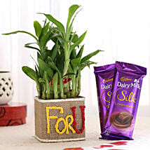 2 Layer Lucky Bamboo In For U Vase With Dairy Milk Silk Chocolates: Send Plants n Chocolates