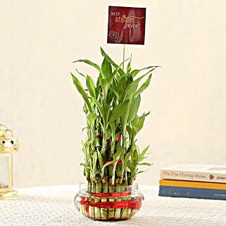 3 Layer Bamboo For Best Sister: Raksha Bandhan Plants