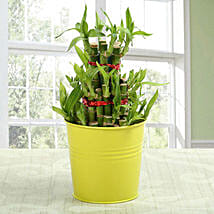 3 layer lucky bamboo Plant: Send Lucky Bamboo to Noida