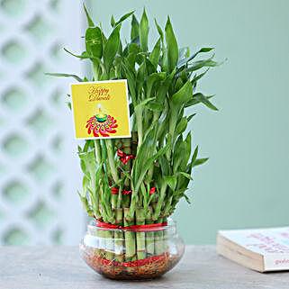 3 Lucky Layer Bamboo For Diwali: Lucky Bamboo to Kolkata