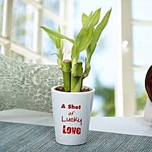 A Shot Of Lucky Love Plant: Send Plants to Indore