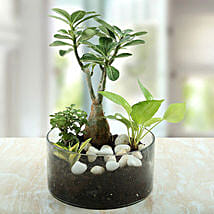 Air Purifying Terrarium: Plants Delivery