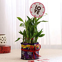 Bamboo with Love Tag & Dairy Milk Combo: Send Plants n Chocolates