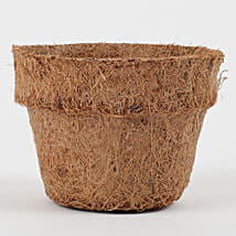 Bio Degradable Coconut Husk Pot Mini: Pots for Plants