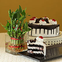 Blackforest Cake N Two Layer Bamboo Plant: Send Lucky Bamboo for Teachers Day