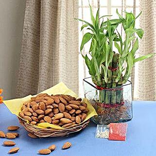 Braceful Bhaidooj Celebration: Order Plants n Chocolates