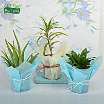 Bring Joy to Life Plants: Gifts for Aquarians