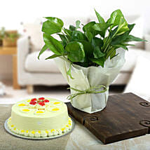 Butterscotch Cake N Lucky Money Plant: Money Plant