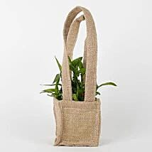 Carry Lucky Bamboo Plant Around: Lucky Bamboo for Friendship Day