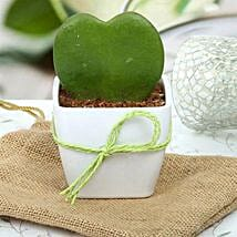 Cute Love Plant: Plants to Lucknow