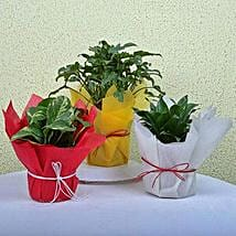 Enjoy Life House Plants: Good Luck Plants for Mothers Day