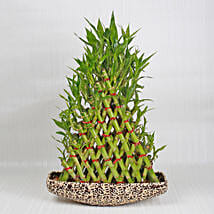 Exotic 8 Layer Lucky Pyramid Bamboo Plant: Birthday Premium Gifts
