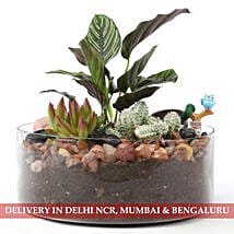 Exotic Green Dish Garden: New Arrived Plants
