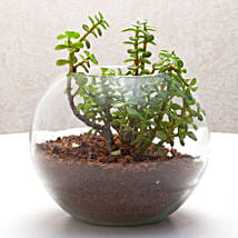 Fantastic Jade Terrarium: Good Luck Plants for Birthday