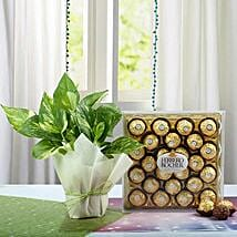 Ferrero Rocher N Money Plant Combo: Send New Year Gift Hampers