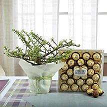Ferrero Rocher with Jade Plant: New Year Gift Hampers
