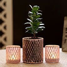 Ficus Compacta Plant In Mosaic Art Glass Pot & 2 Votive Holders: Send Rakhi with Mugs
