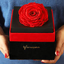 Big Forever Red Rose in Black Velvet Box: Send Flowers to Buldhana