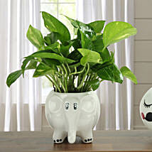 Freshen Up Money Plant: