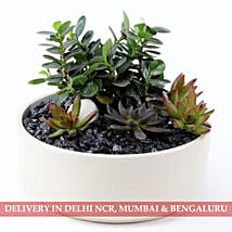 Full Of Greens Dish Garden: New Arrived Plants