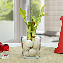 Get Lucky Bamboo Plant: Home Decor items for Christmas