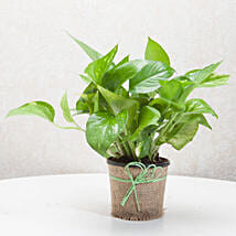 Gift Money Plant for Prosperity: Send Home Decor for Diwali