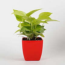 Golden Money Plant in Red Imported Plastic Pot: Mother's Day Plants