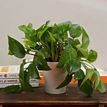 Good Fortune Money Plant: Send Plants to Indore