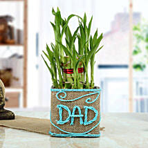 Good Luck Bamboo Plant for Dad: Birthday Gifts for Dad