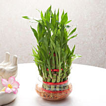 Good Luck Three Layer Bamboo Plant: Diwali Gifts Bareilly