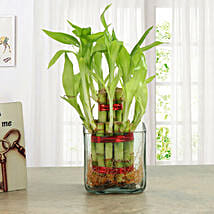 Good Luck Two Layer Bamboo Plant: Gifts to Udupi