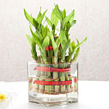 Good Luck Two Layer Bamboo Plant: Send Home Decor for Diwali