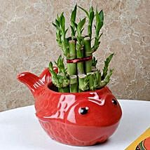 Gorgeous Lucky Bamboo Plant: Lucky Bamboo for Friendship Day