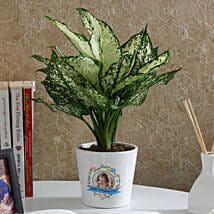 Gorgeous Silver Aglaonema Plant: Gifts for Daughters Day