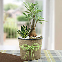 Green Home Decor Dish Garden: Outdoor Plants