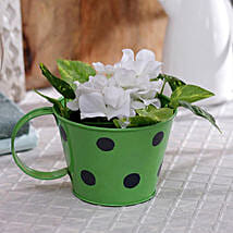 Green Polka Planter: Garden Tools and Accessories