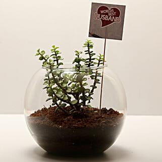 Jade Plant For Best Husband: Crassula Plant